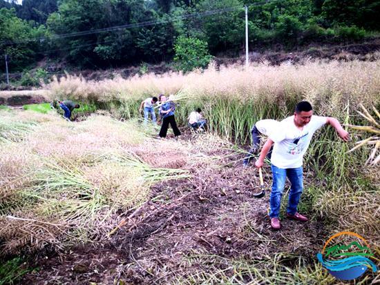 仙海组织社区服刑人员参加支农公益劳动